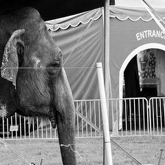 circus..
