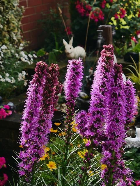 Unusual Looking Plant