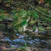 Stream in the Catskill Mountains