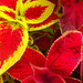 Brightly Coloured Leaves