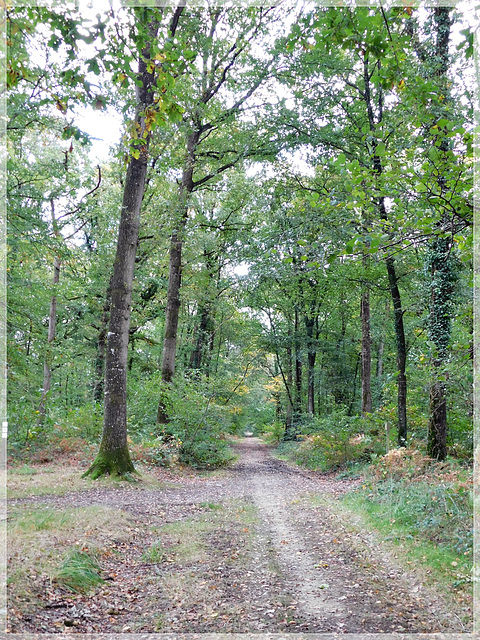 Forêt de coetquen (22)