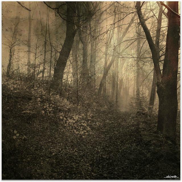 ...on a foggy day...