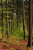 Tännesberger Wald