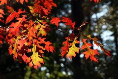 Un havre de sérénité , avec juste le bruissement des feuilles .