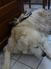 ...trouver un coussin confortable pour dormir...