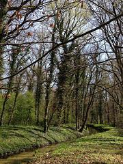 Frühling -1
