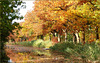 Happy Autumn...