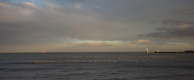 Glowing seagulls