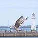 Seagull May set (66)
