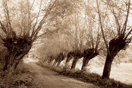 polish roads ( polskie drogi )