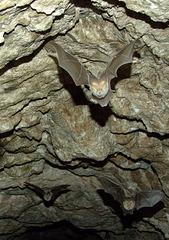 Bats in approach
