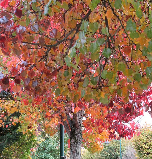 Q comme QUAND l'automne est là