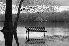 black & white friday