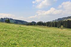 Allgäulandschaft bei Steibis - HFF