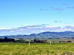 Rural South Waikato