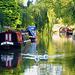 Swans on the Shropshire Union