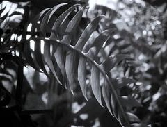 L.A. County Arboretum (33)