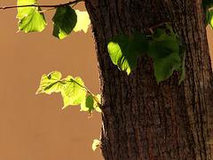 1 (46)a..tree baum leaf blatt