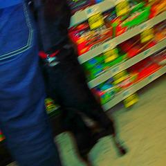 Drug store dog