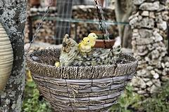 Chickens in a Basket – El-Muraqa Monastery, Daliyat al-Karmel, Israel