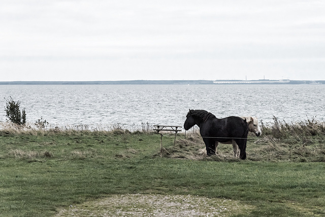 Ostsee/Baltic Sea-Ponies