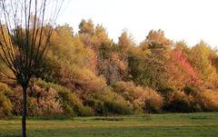 United colors of autumn