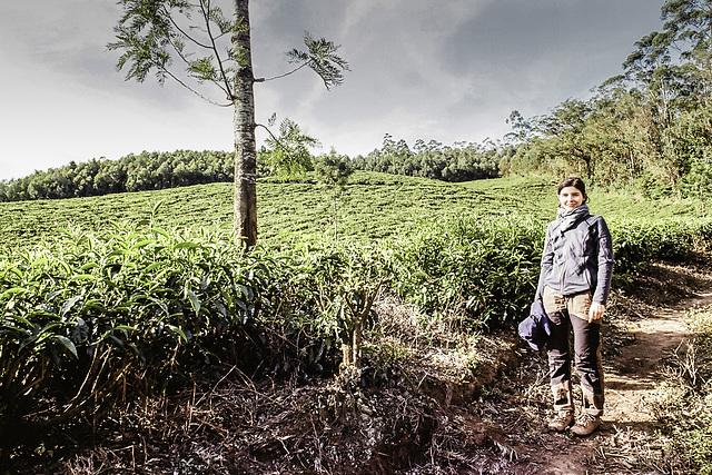 Munnar tea plantages