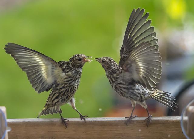Territorial Disagreement at a Free Buffet