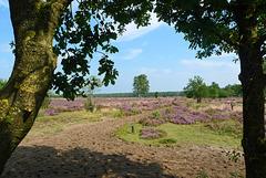 Nederland - Kootwijkse Veld