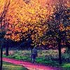 Derive d'automne