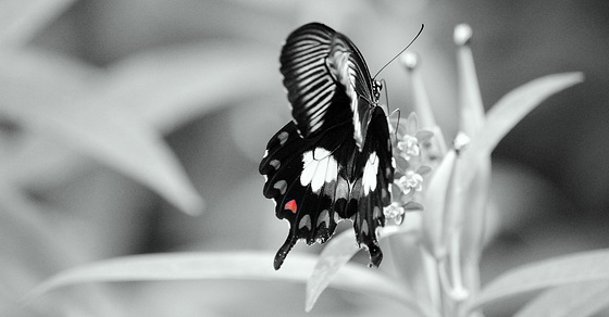 butterfly with heart