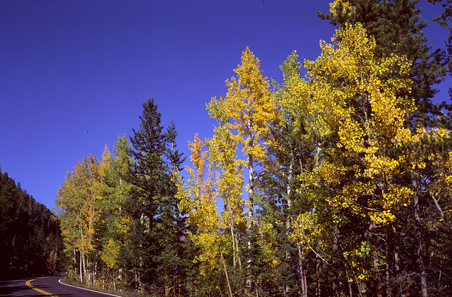 Fall color - Rocky Mountain National Park