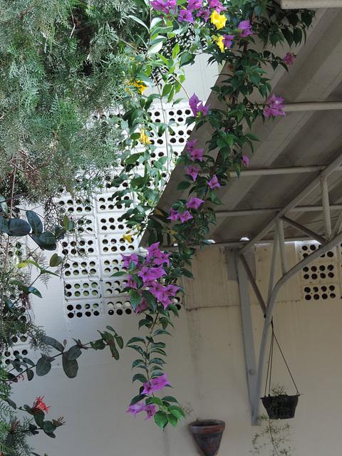 Flora angulo.
