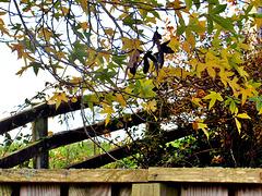 Fenced Around.
