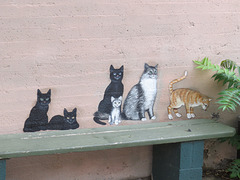 The Cats Of Miami