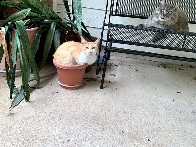 I nostri amici i gatti