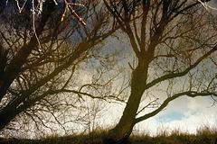 Spiegelbild-Illusion-Réflexion - Topy Turvey Land