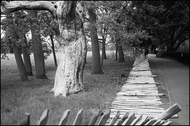 Fallen Fence, Dulwich.