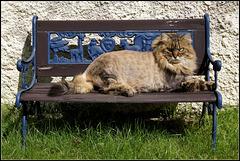 Le chat sur le banc