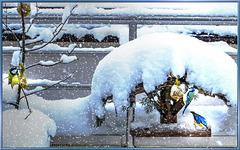 Food for birds in winter. ©UdoSm