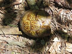 Garip's turtle 2019-07-25