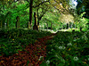 Bothal Churchyard. Northumberland. Taken back by nature to create a magical woodland burial ground