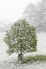 Zeitgemäss, jedoch nicht mehr erwünscht: Schneefall wie im Winter - 2017-04-19_D500_DSC0247