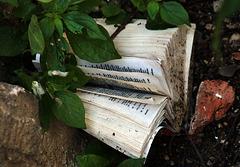 Livre livré à lui-même sur la voie publique .