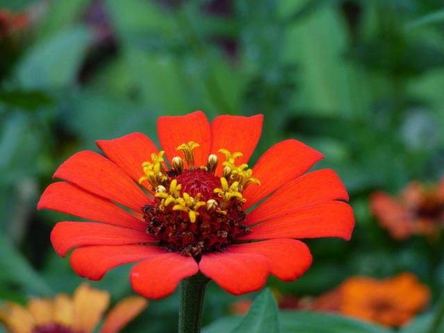 Flor de Costa Rica