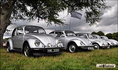 Last Edition Beetles ...