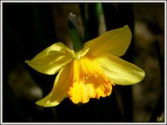 ** Un peu de jaune pour égayer cette journée de pluie **