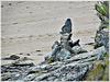 Vue depuis le GR 34 vers les rochers sculptés à Rotheneuf (35)
