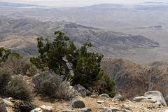 Keyes View