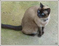 ** Le chat de mon amie disparue **
